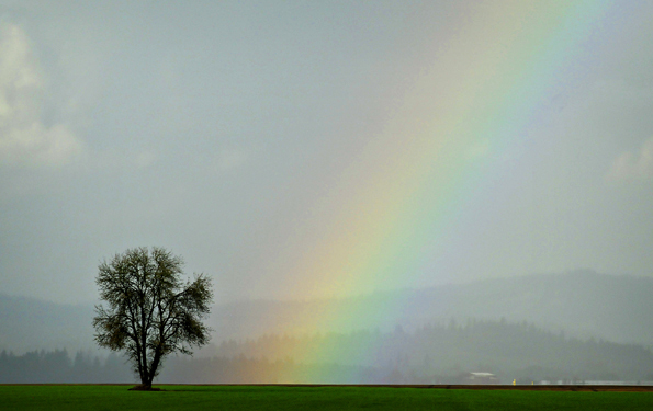 Andy Cripe, Corvallis, Oregon, Benton County, Rainbow